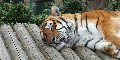 Le repos : dormir bien et suffisamment est important